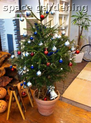 ドイツトウヒ シンボルツリー クリスマスツリー