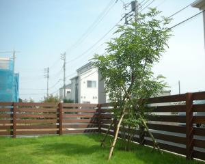植栽 庭木 常緑樹 シンボルツリー ランキング シマトネリコ