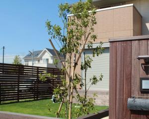 ソヨゴ シンボルツリー ランキング 植栽 庭木 常緑樹