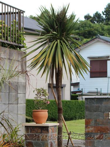 南国風 植栽