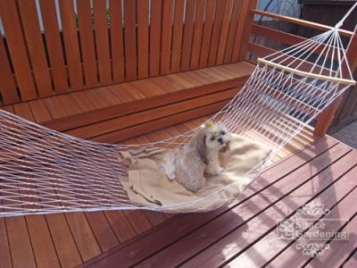 ウッドデッキ 木製 愛犬