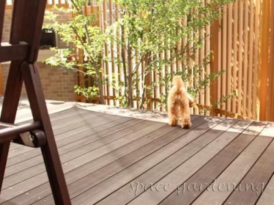 庭 ウッドデッキ 木製 愛犬 トイプードル