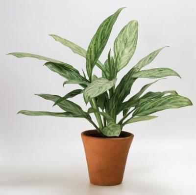 観葉植物 育てやすい おしゃれ インテリア 日陰 日が当たらない