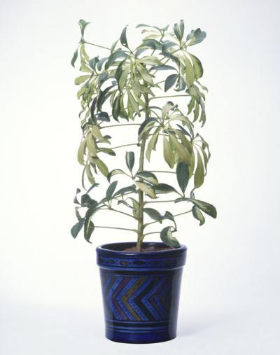 植栽 植物 観葉植物 元気ない 枯れてる 萎れてる 原因 なんで 対応 対処