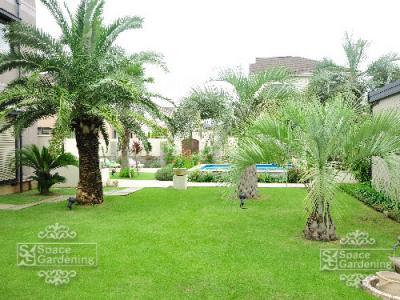 ヤシの木 椰子 庭 デザイン ガーデン リゾート