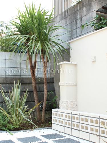 庭 ガーデン デザイン バリ リゾート ドラセナ