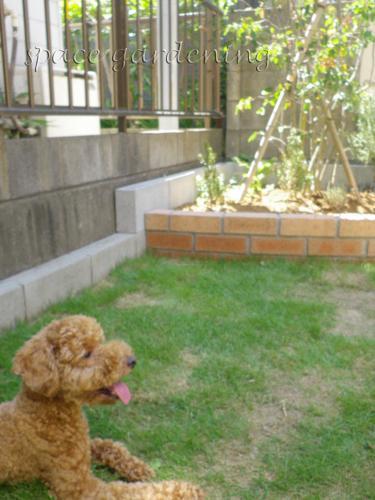 芝生 ペット 管理