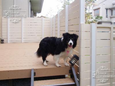 犬 ウッドデッキ 庭