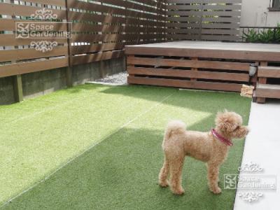 庭 犬 人工芝