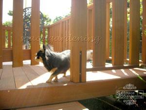 ウッドデッキ 犬 庭