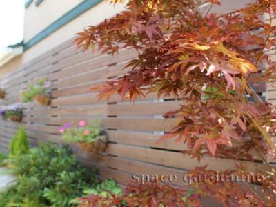 紅葉 もみじ 庭木 シンボルツリー