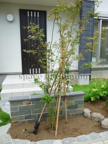 イロハモミジ 植木 シンボルツリー