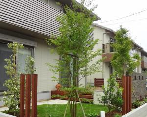 ヒメシャラ シンボルツリー 紅葉