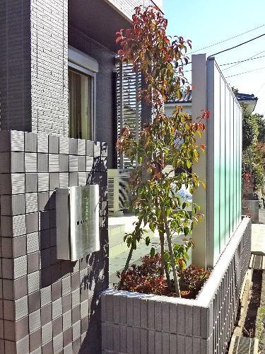 ヤマボウシ 紅葉 シンボルツリー