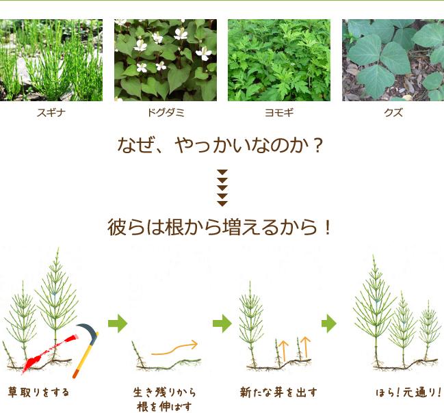 厄介な雑草たち